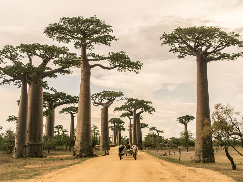 What to see and do in Madagascar